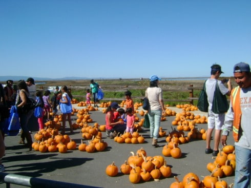 Day Of The Bay- Pumpkins